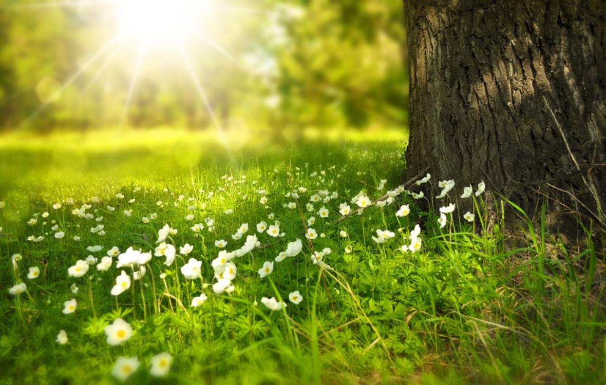 Bem-vinda, primavera! Eis 6 curiosidades sobre esta estação!
