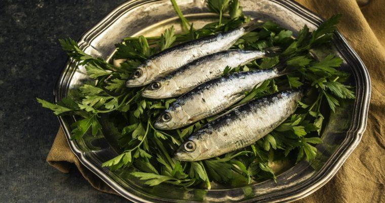 Descubra três curiosidades sobre sardinhas que quase ninguém conhece!
