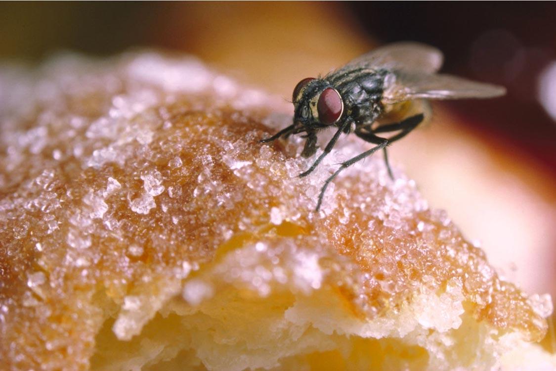 Verão: truques naturais para espantar moscas