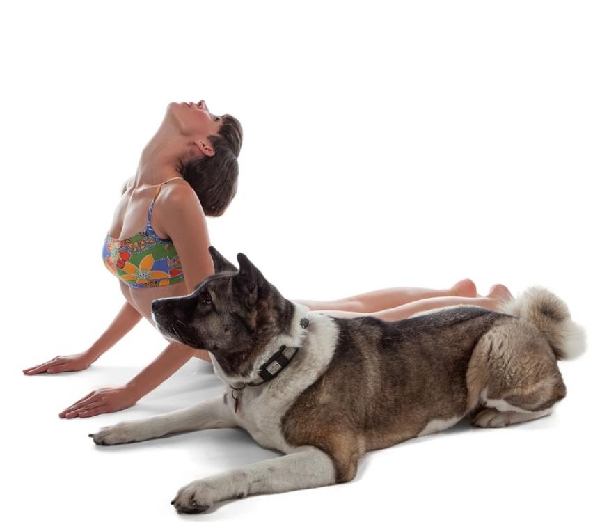 Fazer ioga com o cão é a nova moda no mundo saudável!