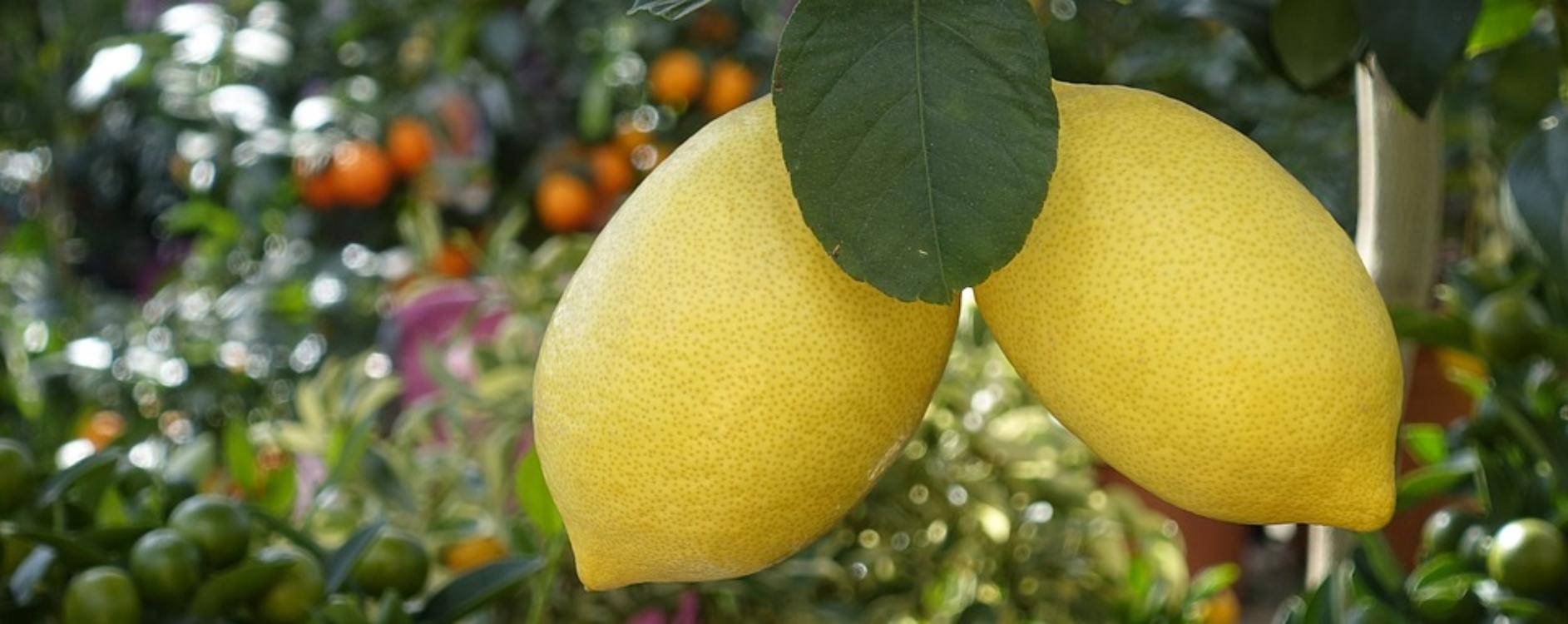 Coloquei umas gotas de limão no arroz a cozer… e nem imagina o que aconteceu!