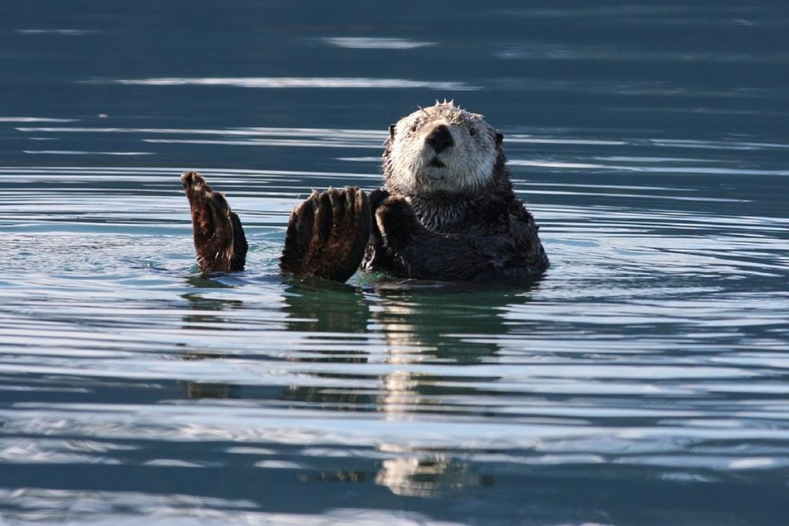 11 curiosidades sobre animais… que nos deixam completamente rendidos!