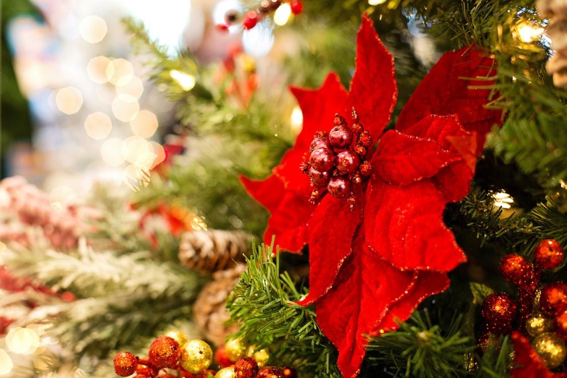 A história do Natal que nunca leu antes: descubra a verdadeira origem da data!